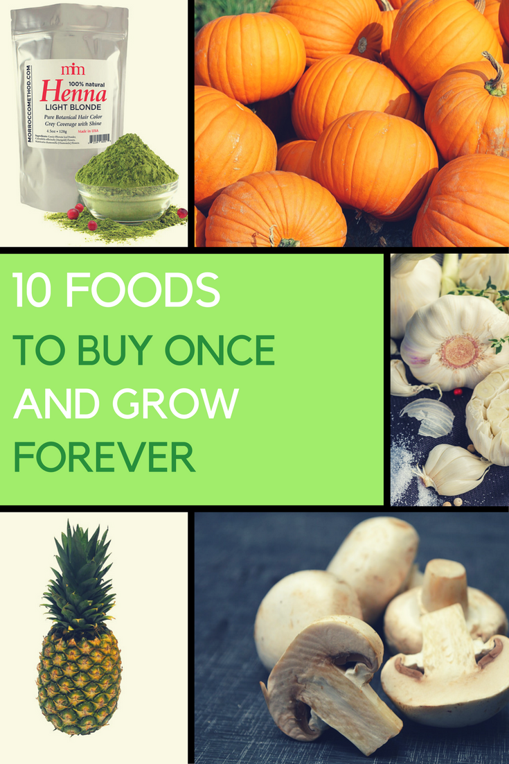 Foods to Buy Once and Regrow Forever