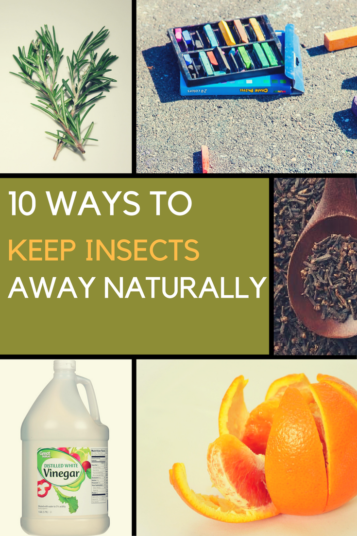 10 Ways to Keep Insects Away Naturally