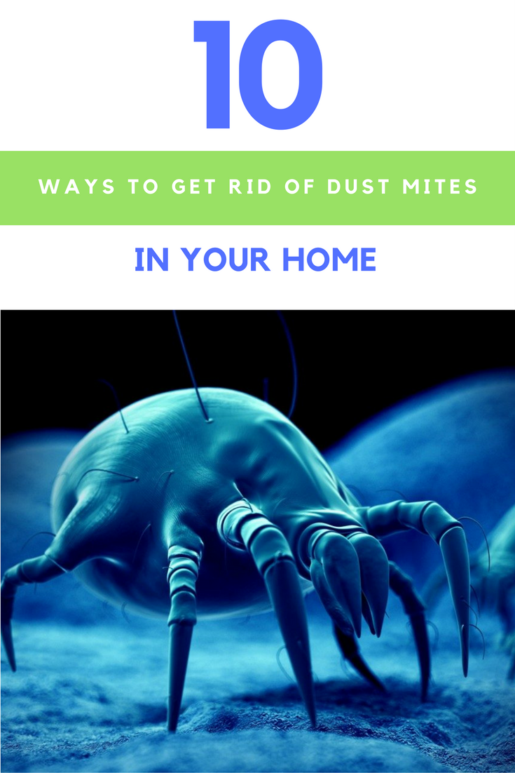 10 Ways To Get Rid Of Dust Mites Without Using Harmful Chemicals. | Ideahacks.com