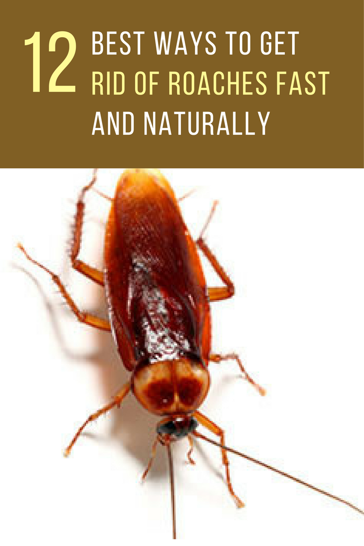 12 Best Ways To Get Rid Of Roaches Fast