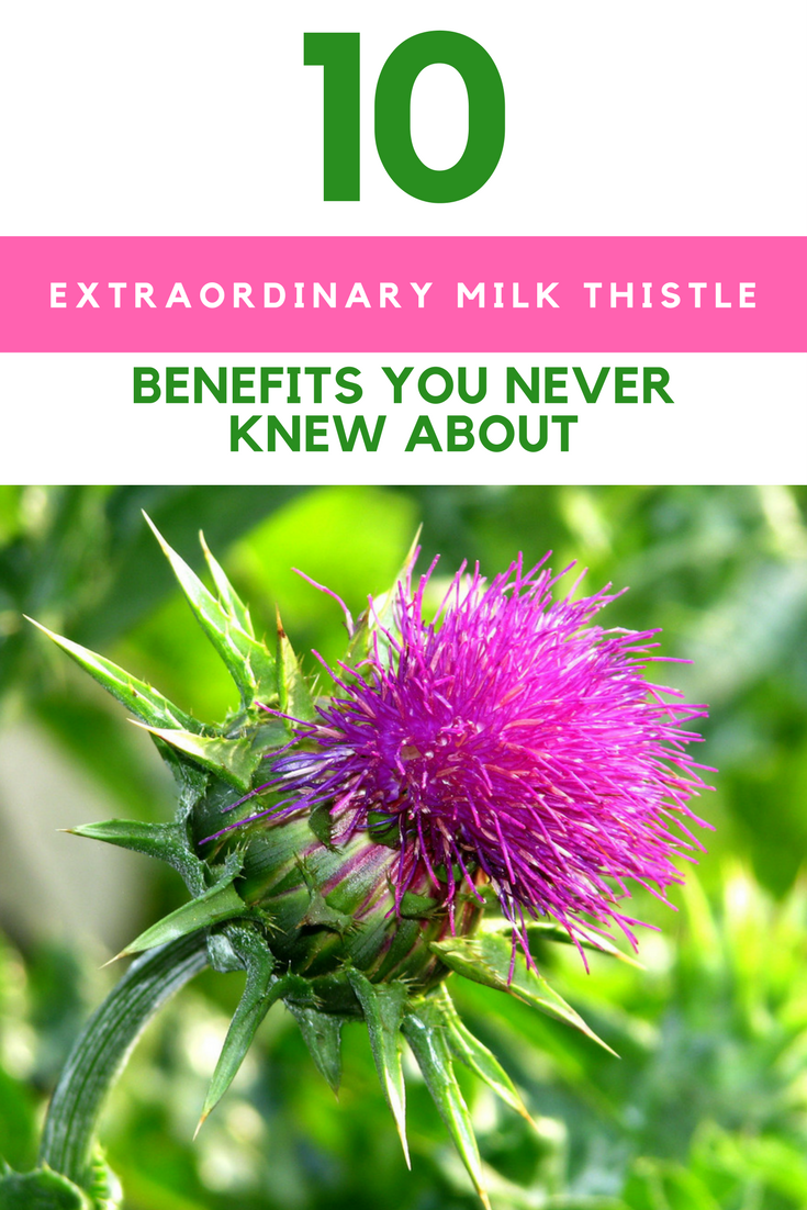 10 Extraordinary Milk Thistle Benefits You Never Knew About. | Ideahacks.com